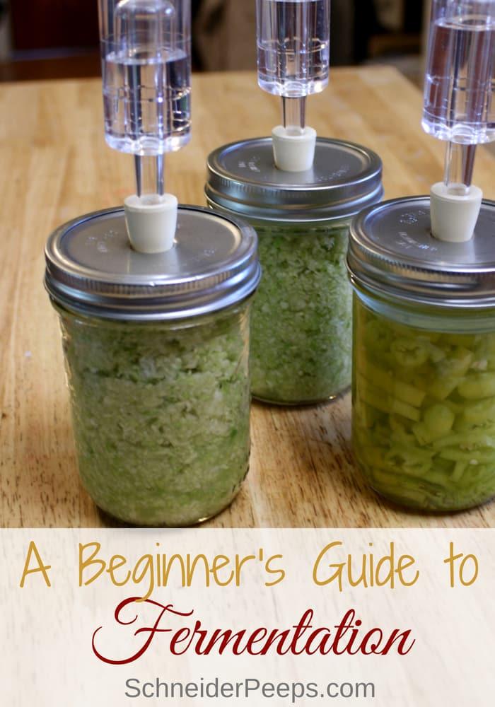 Beginner 39 S Guide To Fermentation Schneiderpeeps
