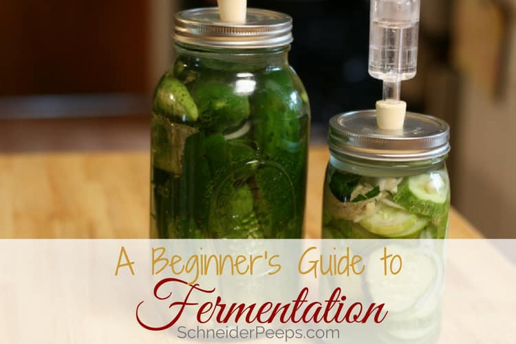 image of fermenting cucumbers in mason jar with airlock lids