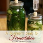 Fermentation is an old way of preserving food, before refrigeration or canning. Fermented foods include common items such as yogurt, cheese, and sauerkraut, plus less common items such as kefir, kvass, and kimchi. Learn why and how to make homemade fermented vegetables for optimum gut health.