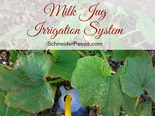 image of milk jug with water hose in it surrounded by squash