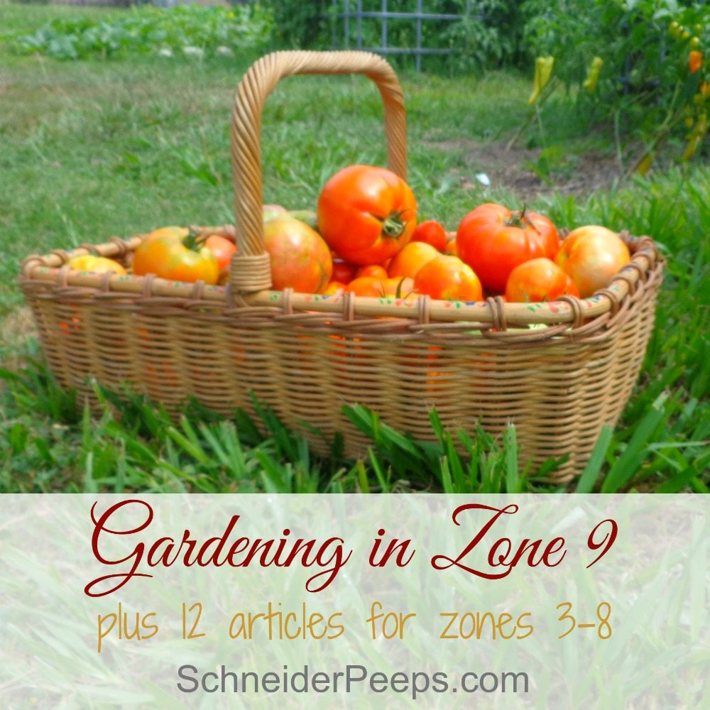 gardening in zone 9 plus tips for other zones