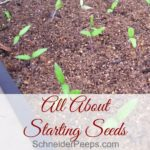 All About Starting Seeds