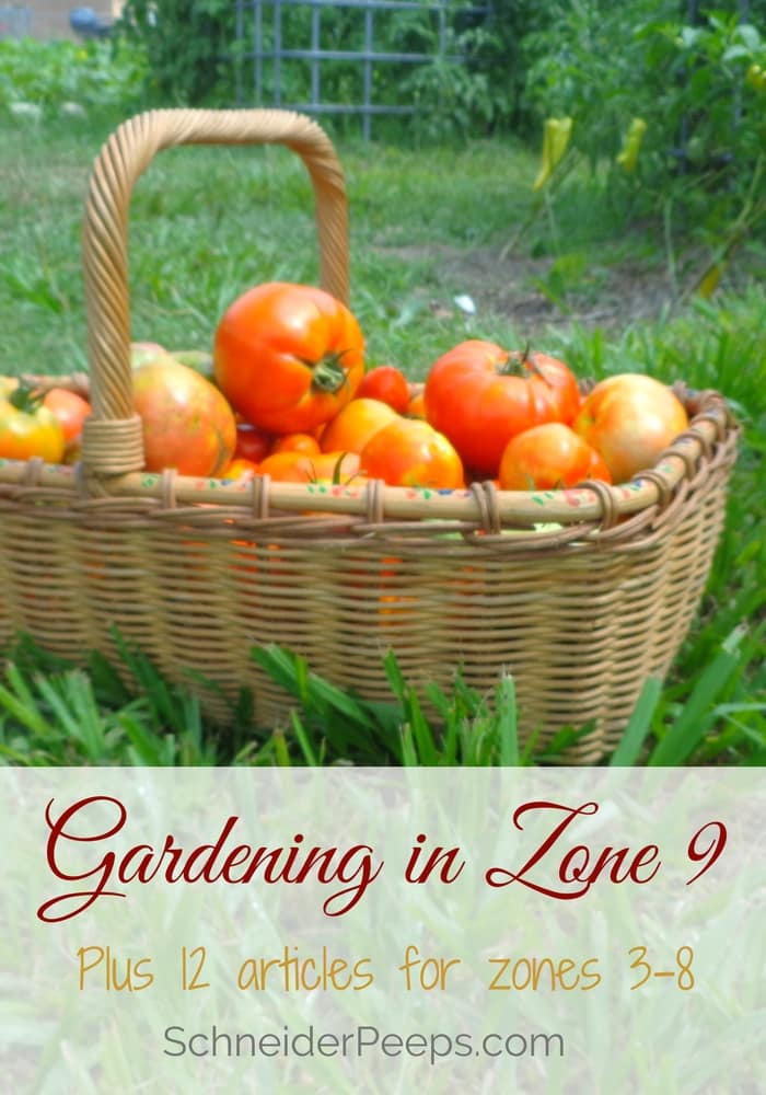 Gardening In Zone 9 Is A Year Round Project. Learn What To Plant And Harvest