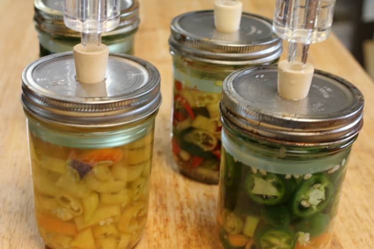 image of fermenting peppers with airlock lids