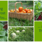 What gardening zones and frost dates tell you…and what they don't