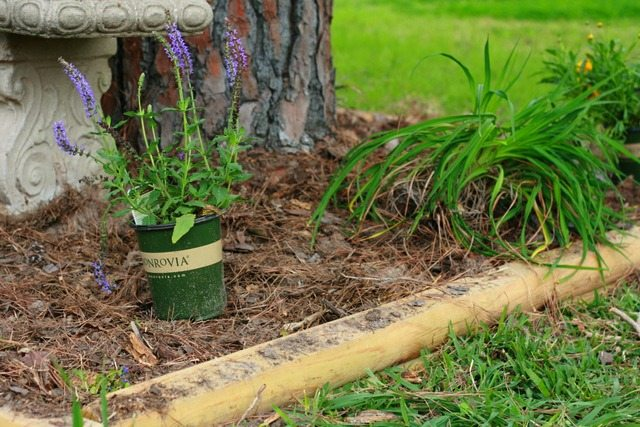 SchneiderPeeps - Using waterwise plants in your landscape design. Low water perennials can help you have a beautiful, low-fuss garden. Not sure what perennials are low water? This article has a great list.