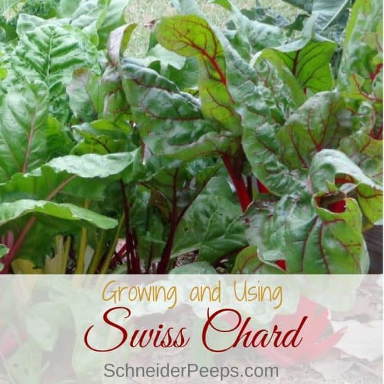Growing and Using Swiss Chard