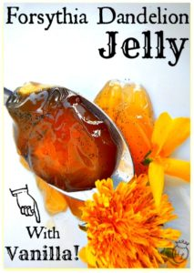 Forsythia-Dandelion-Jelly-with-Vanilla-l-Spring-foraged-flowers-for-sweets-l-Homestead-Lady-.com_