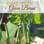 Growing green beans is for beginner and experienced gardeners. Learn how to grow, harvest, and store green beans plus how to choose the best green bean varieties for your vegetable garden.