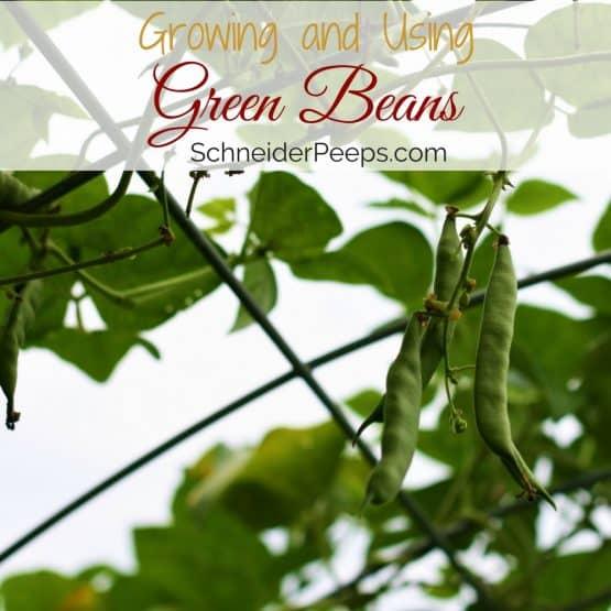 In the garden…green beans