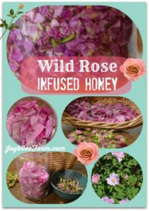 Wild-rose-infused-honey-725x1024 (1)