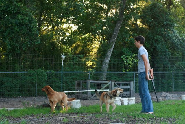 Reasons For Invisible Dog Fencing
