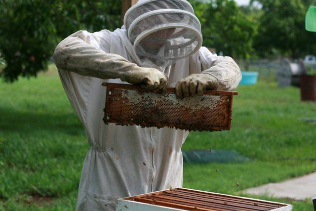 SP Honey Harvest 9