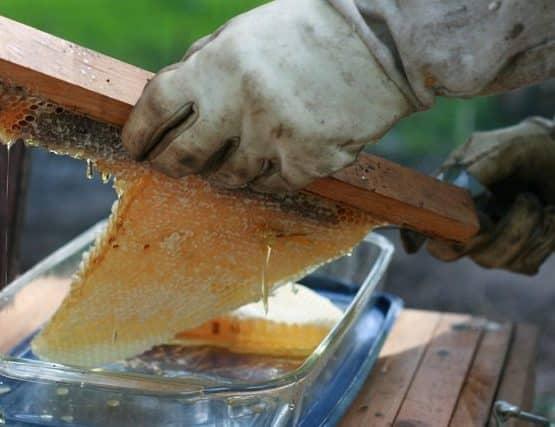 Spring Honey Harvest