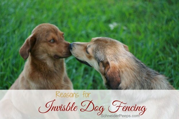 Invisible dog fencing is great for keeping dogs where you want them and out of where you don't. It keeps them safe and helps you be neighborly. There are many options to chose from depending on your circumstances.