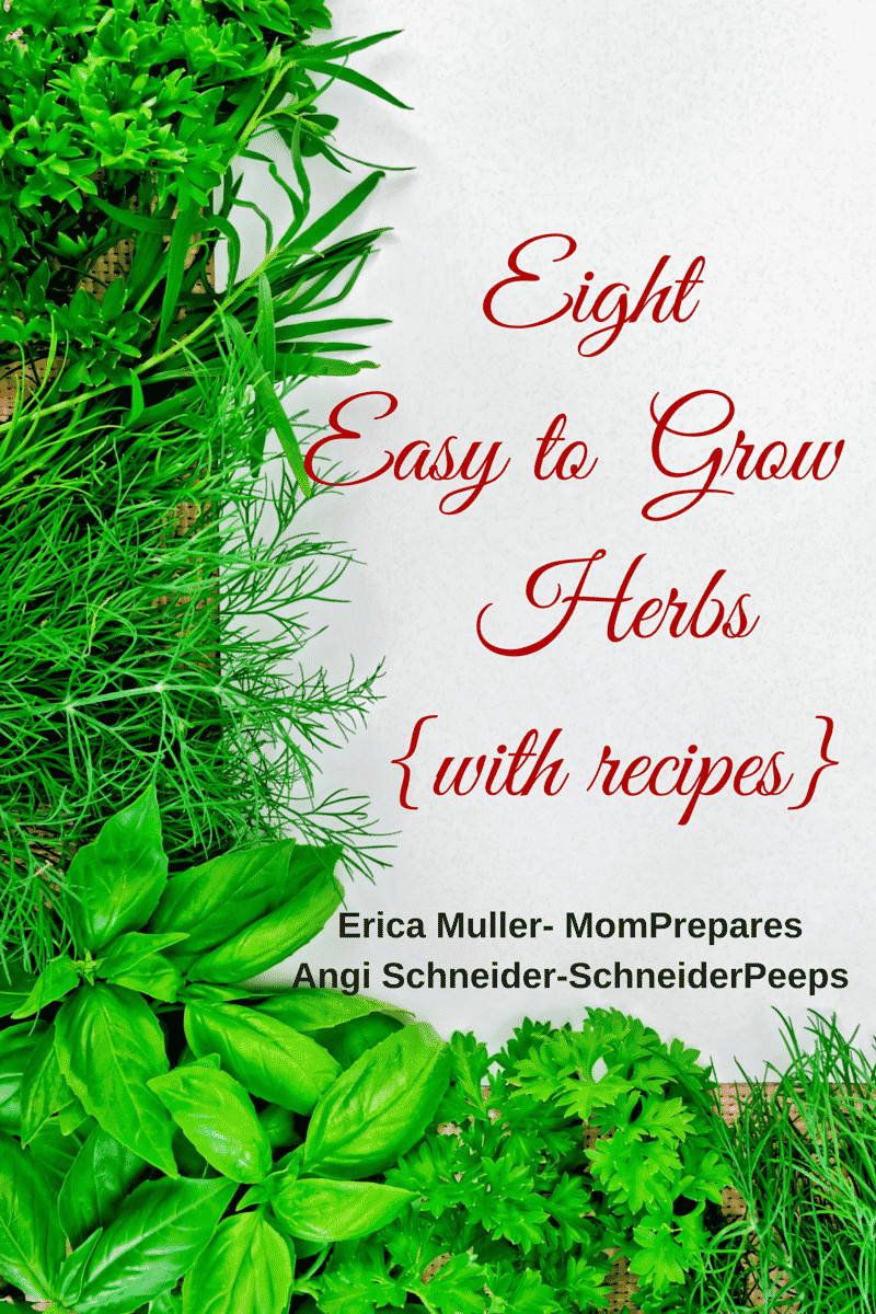Eight easy to grow herbs schneiderpeeps - Tips planting herbs lovage parsley dill ...