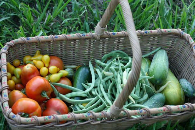 The June Garden in Zone 9 is usually full of goodies to harvest. The heat is about to set in and there is usually less than 4 weeks of harvesting left until fall. This year we've had an unusual amount of rain, come see what is doing well and what isn't.