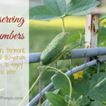 Preserving the Harvest….Cucumbers