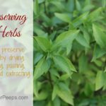 Preserving the Harvest…..Herbs