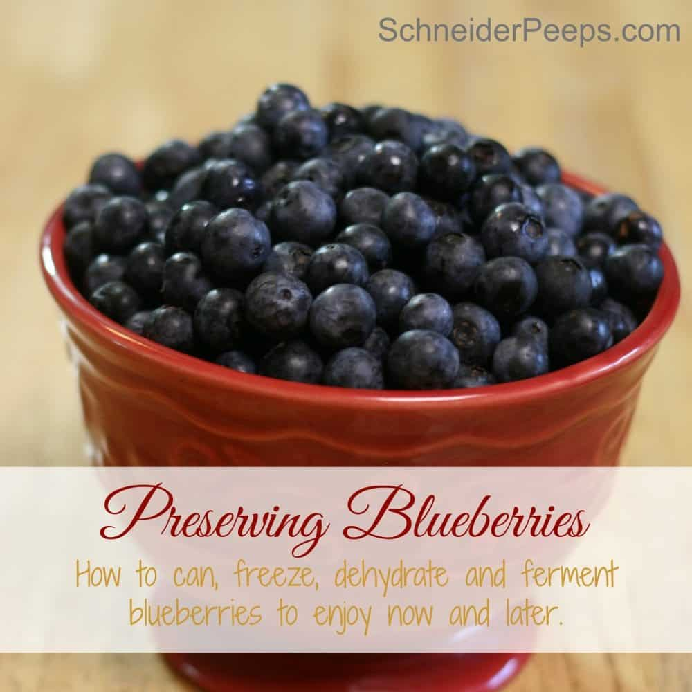 Want to taste summer all year? You can! Learn how to can, freeze, dehydrate and ferment blueberries to enjoy now and later.