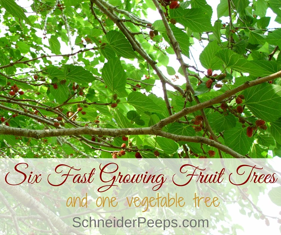 Six fast growing fruit trees and one vegetable schneiderpeeps - Fruit trees every type weather area ...