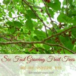 Six fast growing fruit trees {and one vegetable}
