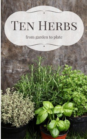 Herb Opt in cover