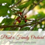 Planting and planning a family orchard