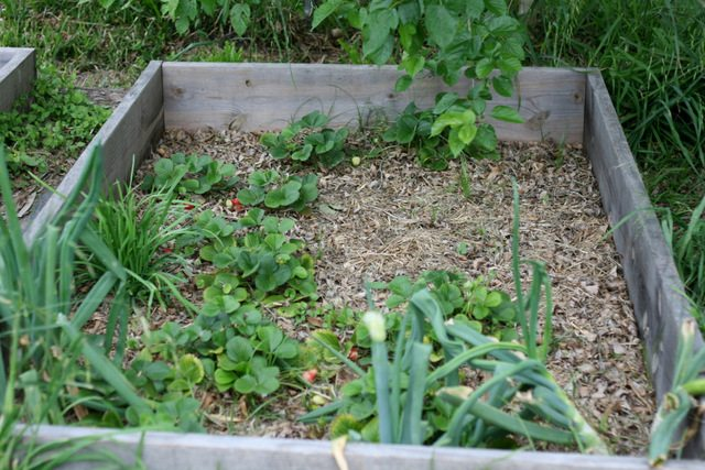 The March Garden in zone 9 is full of starting seeds, transplants, finishing up the winter greens and planting tomatoes and summer squash in their place.