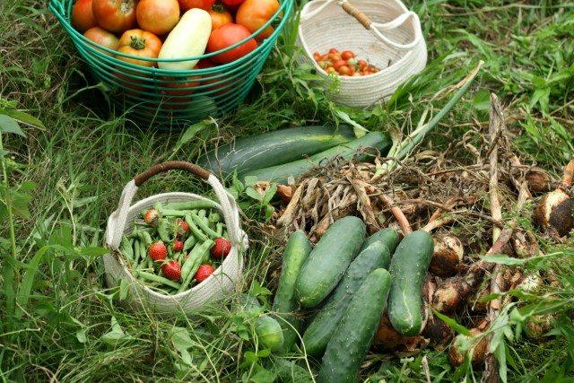 SchneiderPeeps - day's harvest