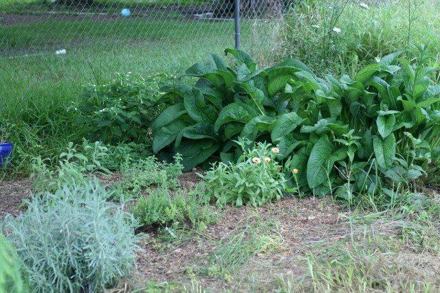 SchneiderPeeps - Herb garden