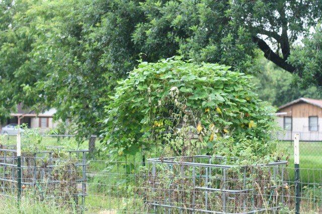 SchneiderPeeps - garden