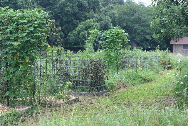 SchneiderPeeps - left of garden