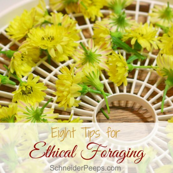 Eight Tips for Ethical Foraging