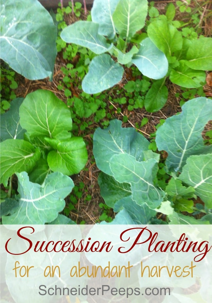Succession planting is a great way to get an abundant harvest. It does take a bit of planning but once you get the hang of it, it's super easy. Learn the different methods and when to use them.