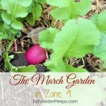 The March Garden