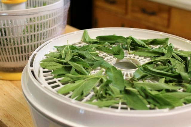 Growing sage ensures you will have plenty to dehydrate