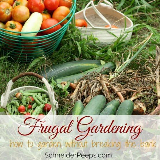 Frugal gardening tips {gardening without breaking the bank}