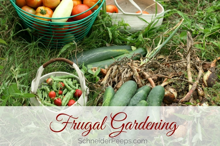 It's possible to get a large harvest with frugal gardening.