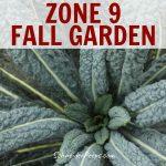 dinosaur kale in fall garden in zone 9