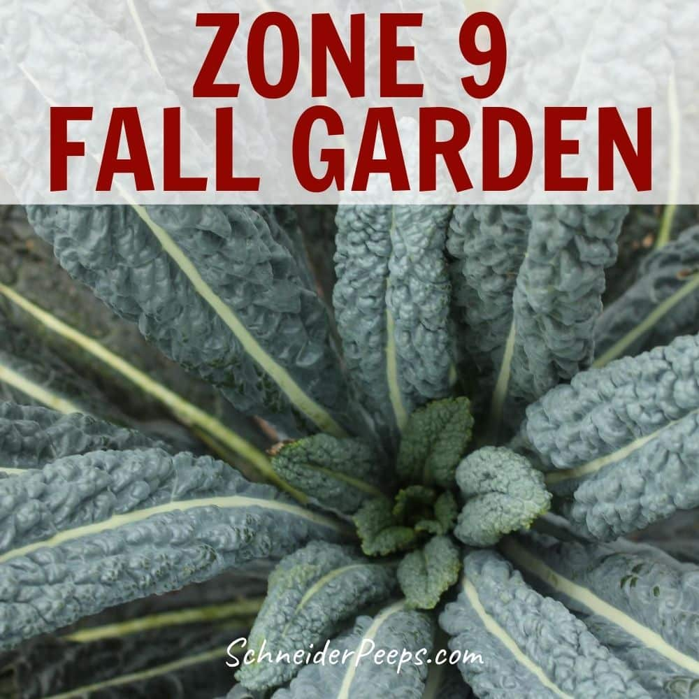 Fall Gardening In Zone 9 {with Links To Other Zones