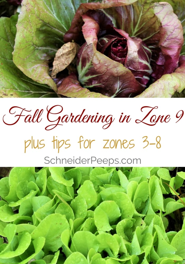 Fall gardening in zone 9 with links to other zones SchneiderPeeps