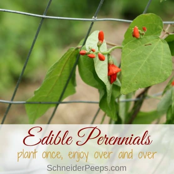 Edible Perennial Plants for the Food Garden