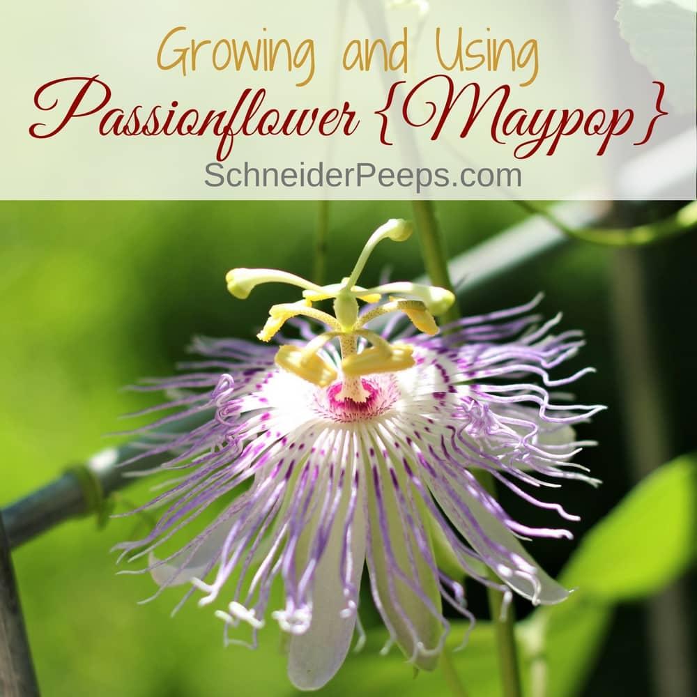 passionflower on vine