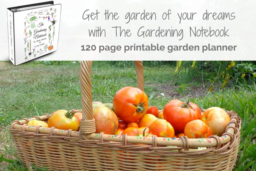 photo of basket of tomatoes and gardening notebook