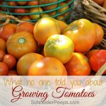 Things No One Tells You About Growing Tomatoes {but you need to know for a good tomato harvest}
