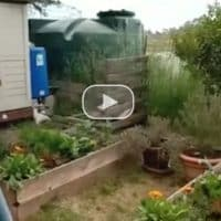 DIY Drip Irrigation System: Irrigate from Rain Barrels by Gravity Feed