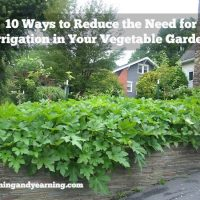 10 Ways to Reduce the Need for Irrigation in Your Garden