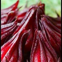 Hibiscus Pomegranate Fire Cider   Chestnut School of Herbal Medicine