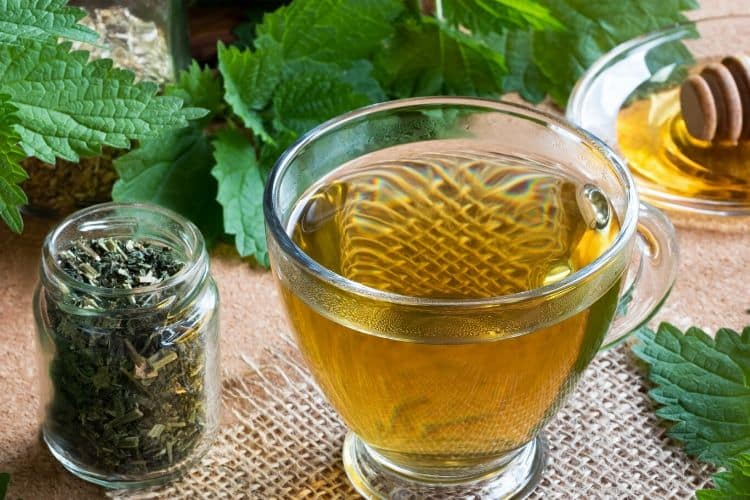 image of nettle tea with dried nettle and fresh nettle in background.